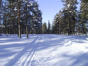Prepared ski trails for cross-country skiing.