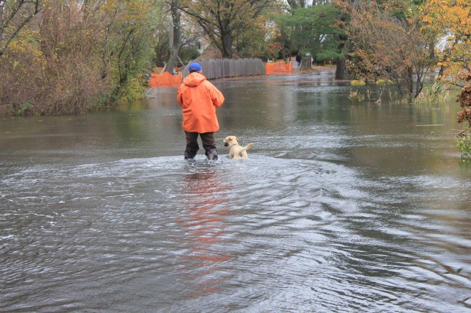 A man and his dog walking to the Saugatuck Harbor Yacht Club to secure the boats