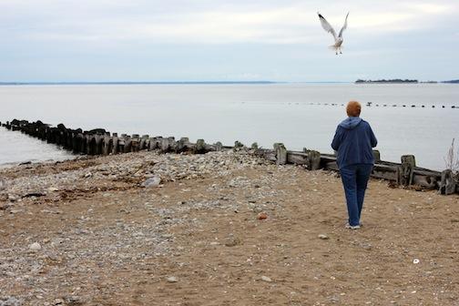 Oct. 7, 2012 | Birds at the Beach