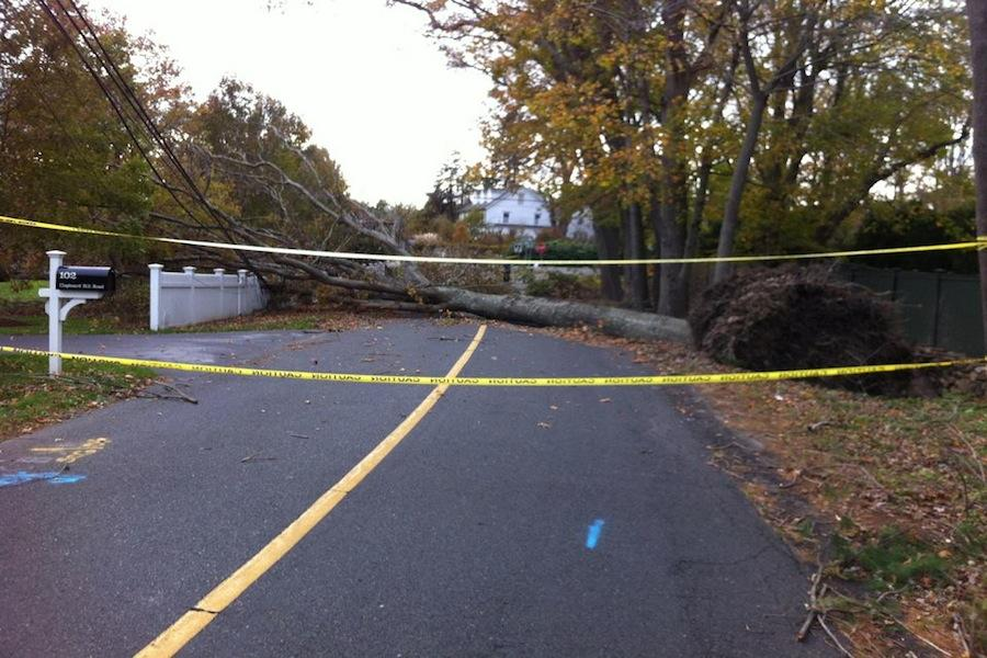 Hurricane Sandy knocked over many trees in Westport such as this on.
