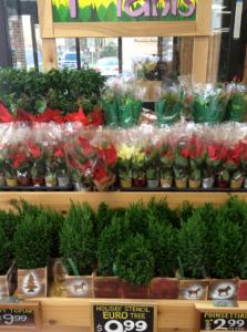 Nov. 25, 2012   Festive Ferns