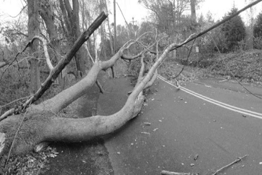 Hurricane Sandy left long-lasting effects. Power outages and tree damage presented challenges in the wake of the storm.