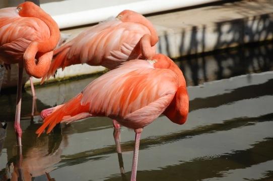 Feb. 24, 2013 | Flamingo Fun
