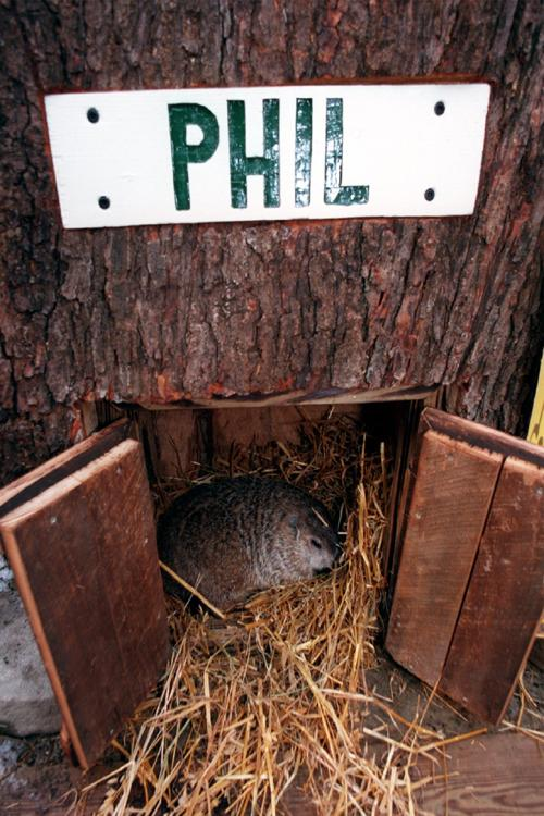 Phil's prediction confirmed students' hope of an early spring.