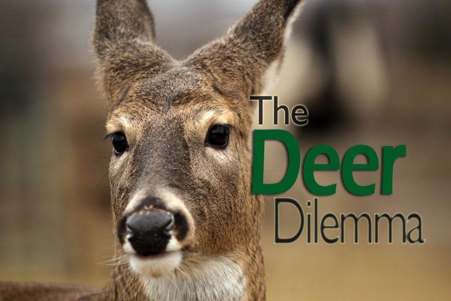 essay on deer in 100 words