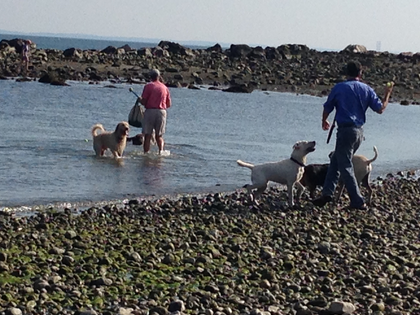 Dogs allowed back at Compo Beach
