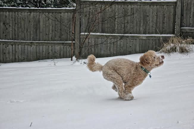 Doggin' it in the snow