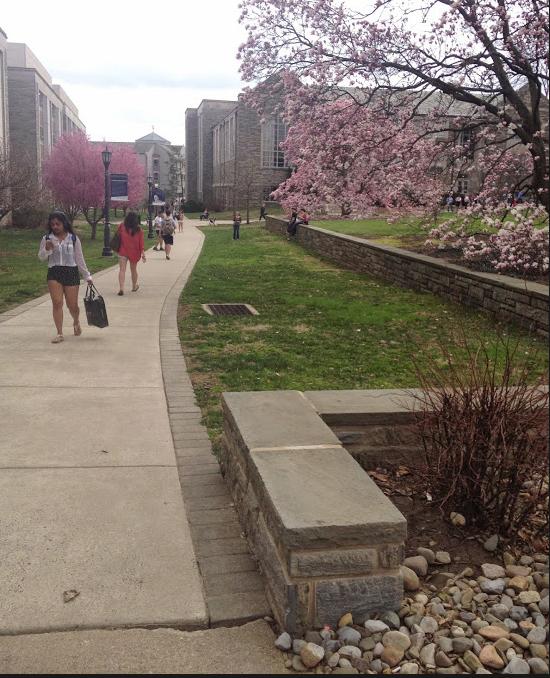 A brisk breeze rustles through the cherry blossom trees at Villanova University.