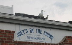 """The seagulls mark their common ground in flocks on top of the famous """"Joey's."""""""