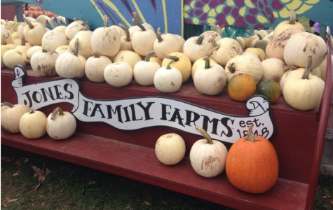 Best Buddies picks prize pumpkins