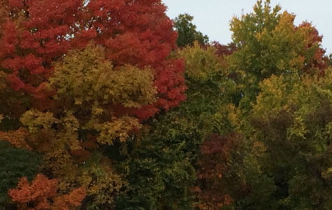 Fall leaves burst with color