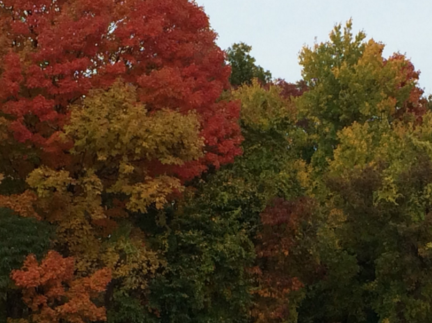 The drastic change in leaves becomes apparent with colors blossoming from emerald green all the way to tangerine orange. Photo by Chase Gornbein '16.