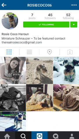 "Pet Instagrams are becoming the new ""fad"