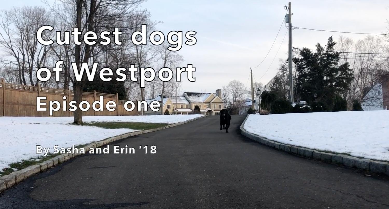 Cutest dogs of Westport