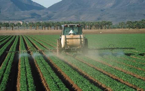 E. coli outbreak in romaine lettuce illustrates food industry's deficiencies