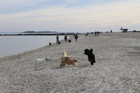 Westport dogs enjoy final weeks at Compo Beach
