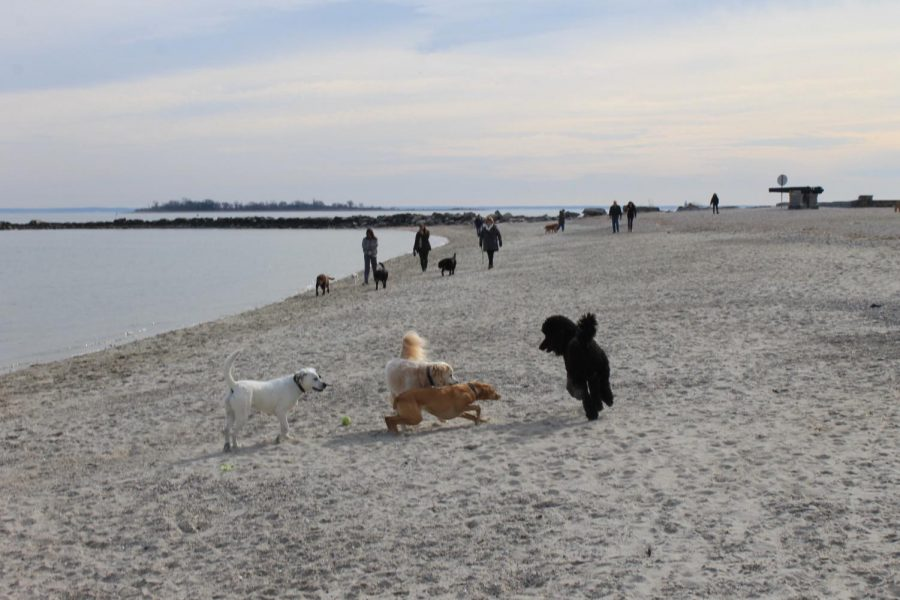 Three+Westport+dogs+play+at+Compo+Beach+while+the+area+is+still+open+to+animals