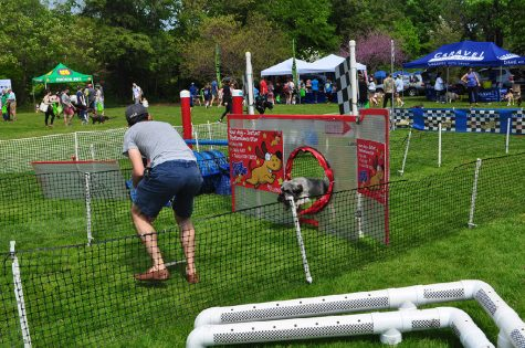 Westport Chamber of Commerce hosts fourth annual Dog Festival