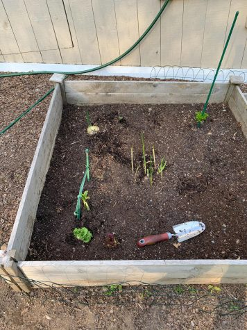 Ways to reduce waste; turn food scraps into gardens