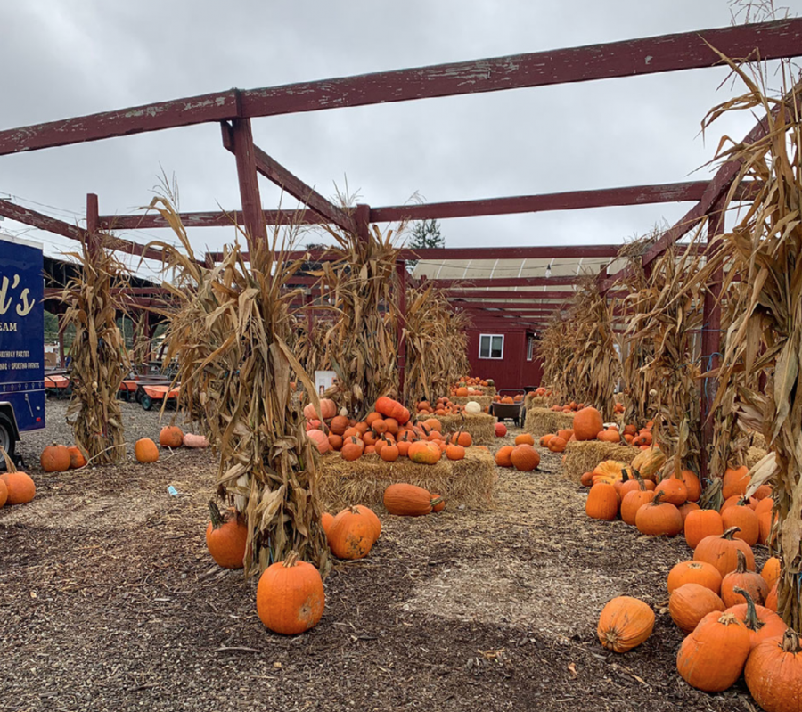 Silverman's Farm in Easton Connecticut serves as a great safe and fun activity for families and friends to partake in this fall season.