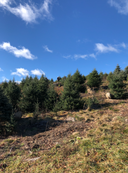 Despite COVID-19 restrictions, Jones Family Farms in Shelton, Connecticut provides a safe and fun environment for families to get their Christmas tree during this holiday season.