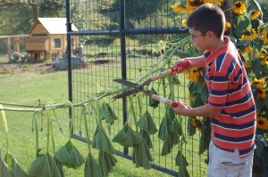 Westport fifth grader, cuts the vine to signify the opening of Wakeman Town Farm. | Photo by Nate Rosen '14