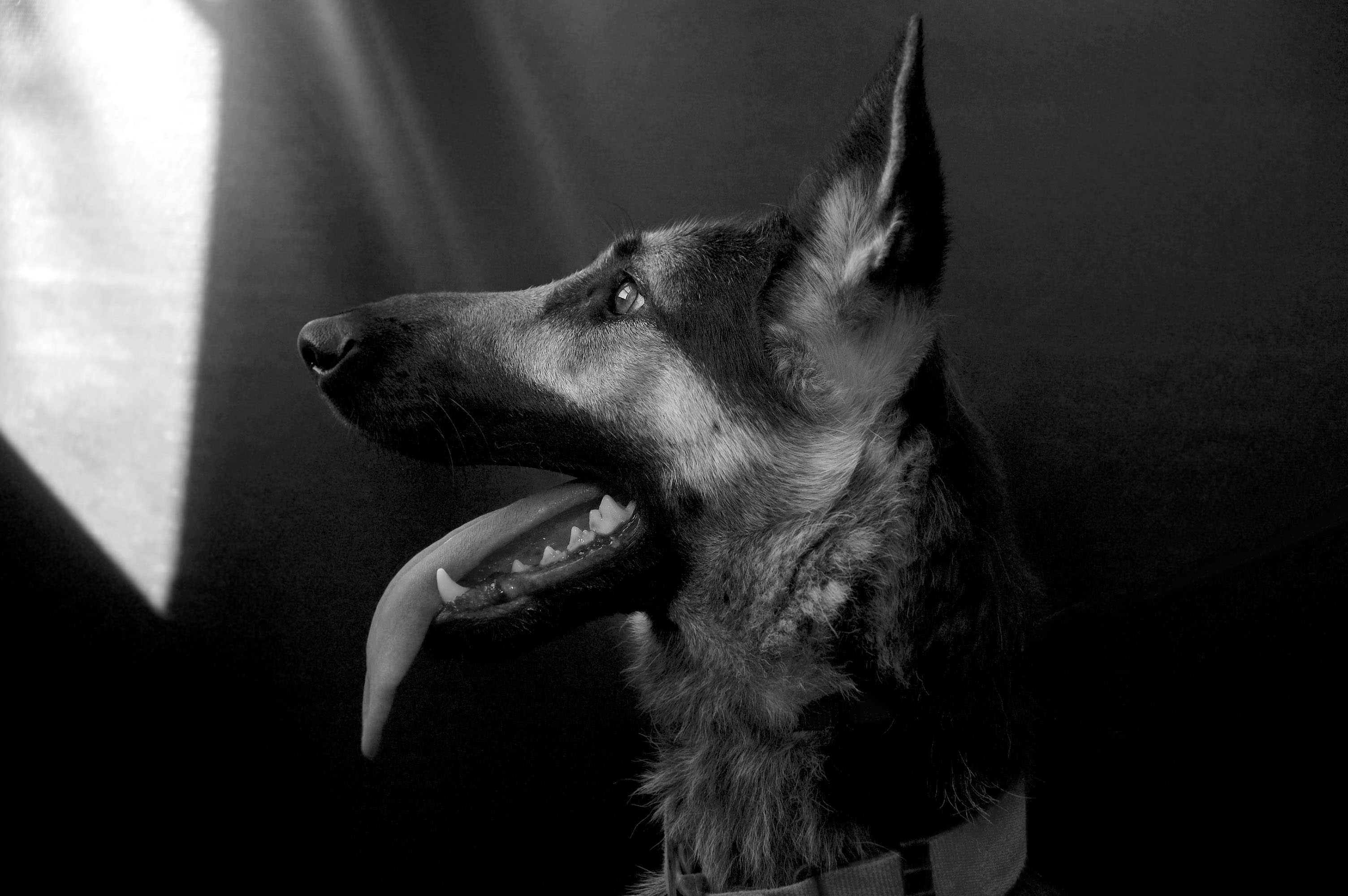"""graphy Club Showcases """"Dog Show"""" at Local Arts Center – Inklings"""