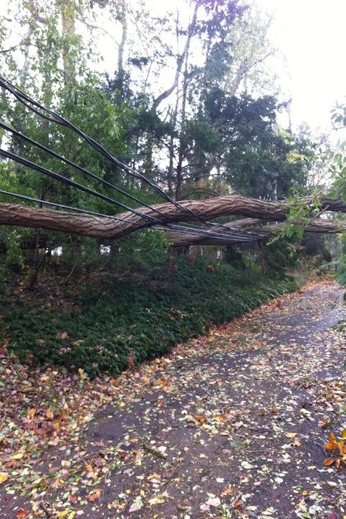 Power lines hold up branches that fell during Hurricane Sandy.