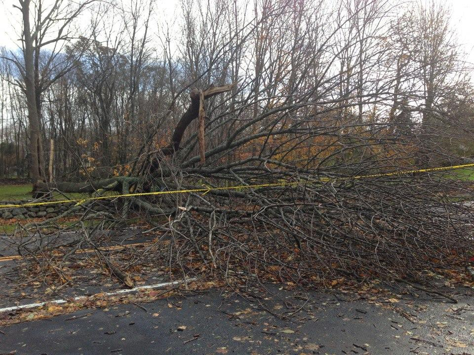 Several roads have been closed due to collapsed trees.