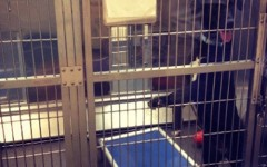 Because the Westport Humane Society does not euthanize animals, pets must be adopted in order to make space for new animals. Currently, the shelter is at full capacity and thus is not accepting other animals.