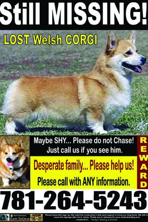 Owner Jordina Ghiggeri still has not given up the search for her lost corgi, even relocating to Norwalk to keep looking for Andy.