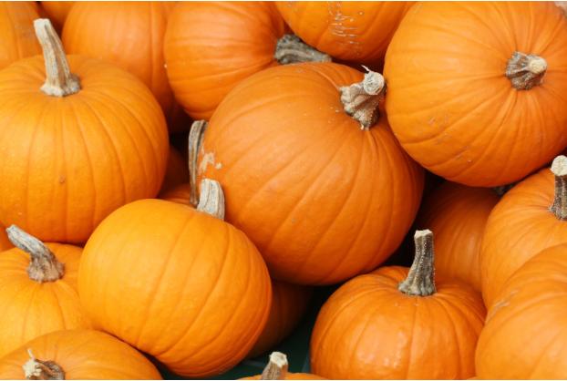 Harvesting pumpkins' potential