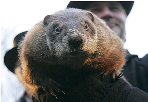 Punxsutawney Phil emerges for his yearly spring predictions