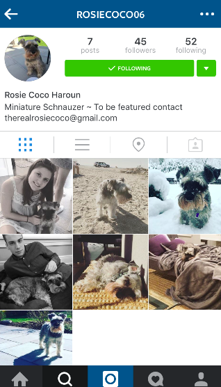 """Pet Instagrams are becoming the new """"fad"""