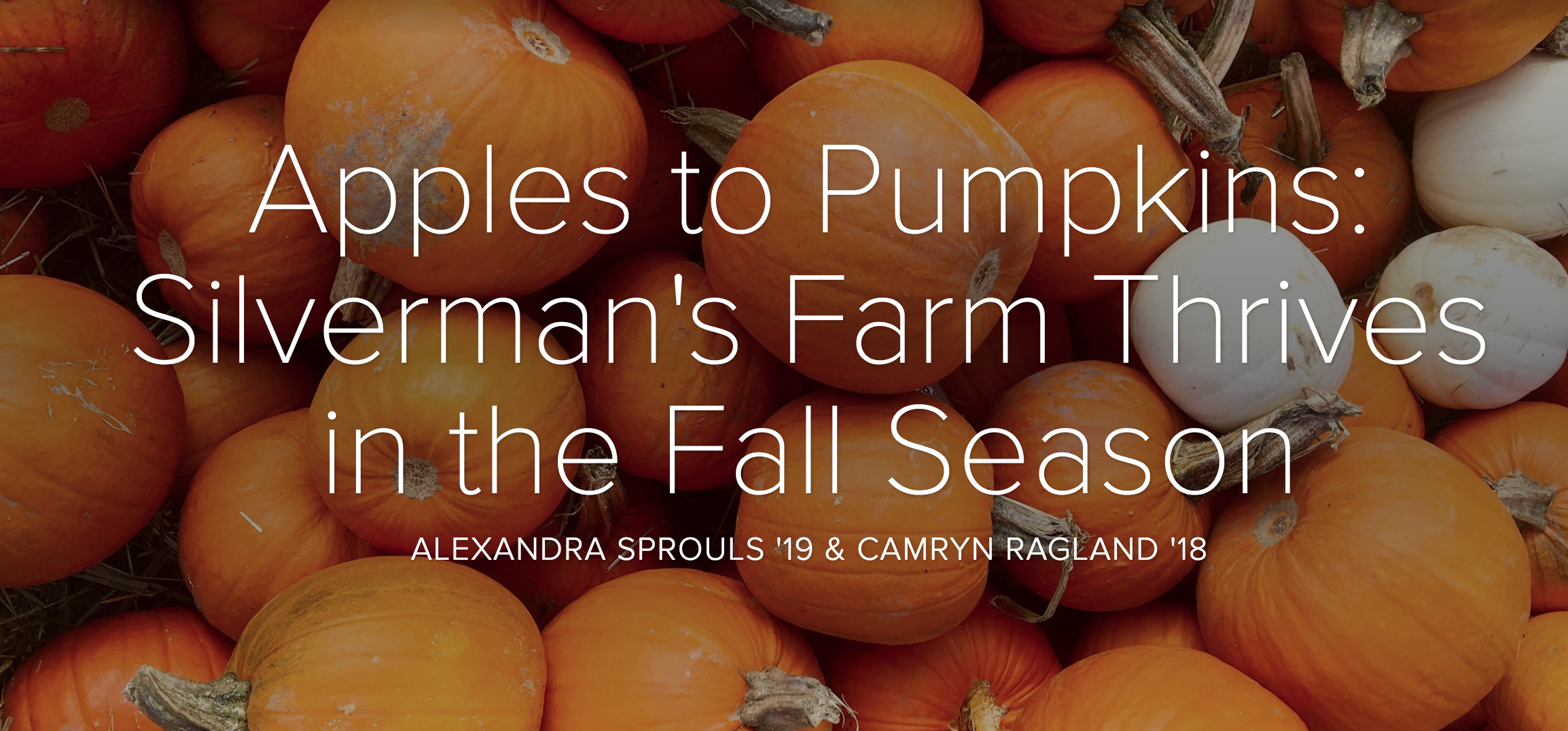 Apples to Pumpkins: Silvermans Farm Thrives in the Fall Season