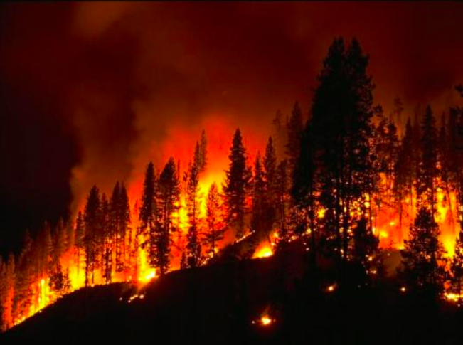 One potential effect of climate change is more frequent wildfires. Photo contributed by Science360 News Service.