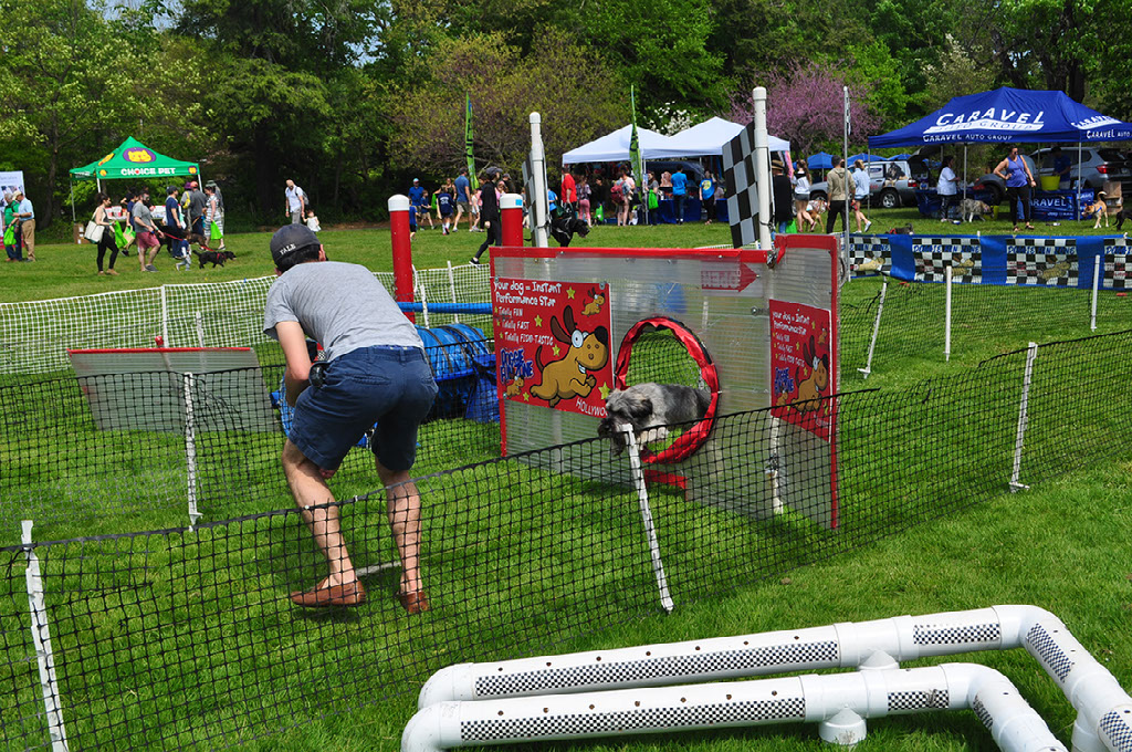 Many activities for dogs and humans were present at the festival. These activities included an obstacle course for dogs, as well as many local businesses selling dog apparel, dog treats and more.