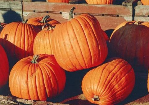 Students plan creative Halloween costumes