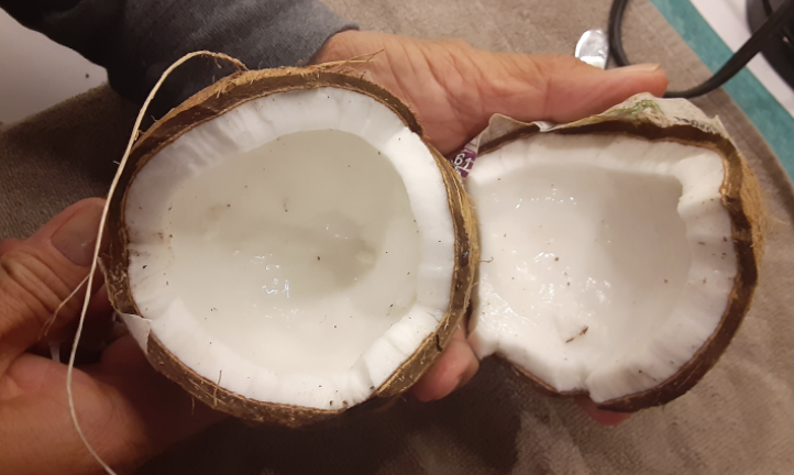 Coconuts+are+my+favorite+fruit+to+both+eat+and+make+a+drink+out+of.+Not+only+are+they+delicious%2C+but+they+have+also+been+shown+to+offer+various+health+benefits%2C+including+improvements+in+heart+health%2C+digestion%2C+weight+loss%2C+brain+health%2C+blood+sugar+levels+and+immunity.