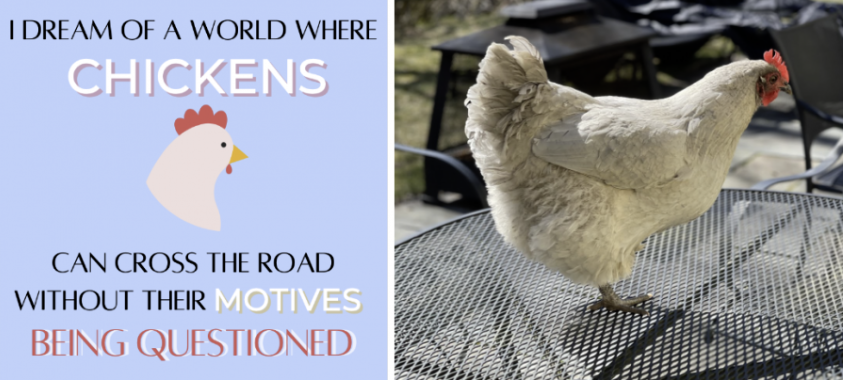 Chickens make for unique, quirky pets: perfect for all homes